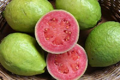 Psidium guajava (Guava)