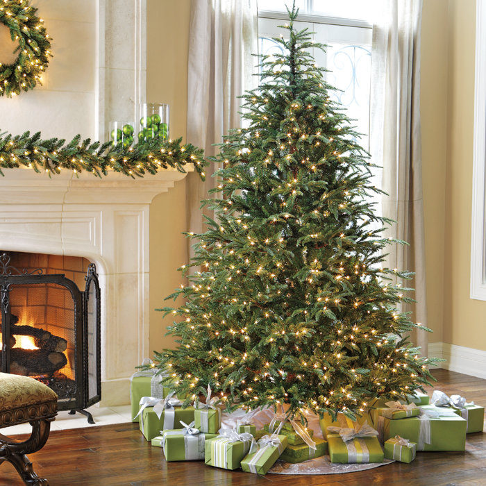 Frasier Fir Christmas Tree.Christmas Tree Xmas Tree Fraser Fir In Dubai